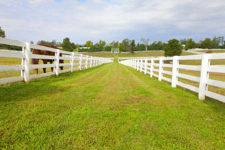 Horse farm with white wooden fences  Stock Photo