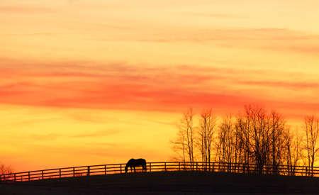 kentucky: Pasture