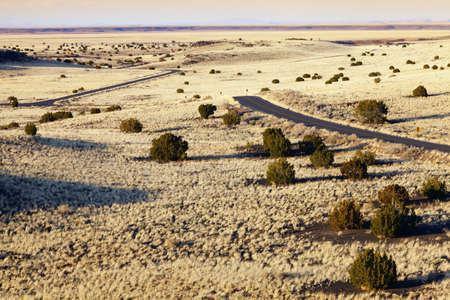 scrub grass: Desert highway