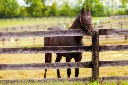 Brown horse standing by the fence  Stock Photo - 16902928