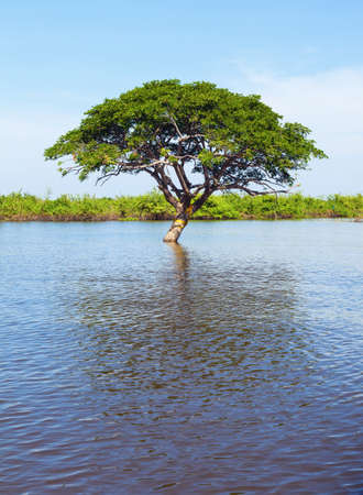 Tree in the water Stock Photo