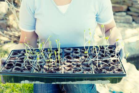 Planting season photo