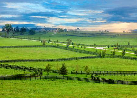 rancho: Caballo de granja en Kentucky Foto de archivo