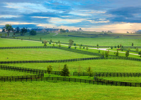 bluegrass: Horse farm in Kentucky