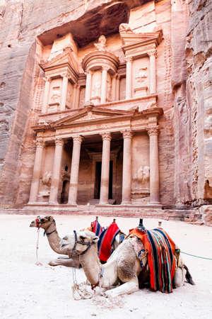 Camels in front of Al Khazneh in Petra, Jordan  Standard-Bild