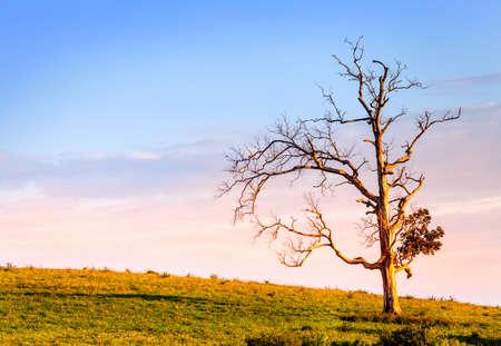 dode bladeren: Eenzame boom Stockfoto