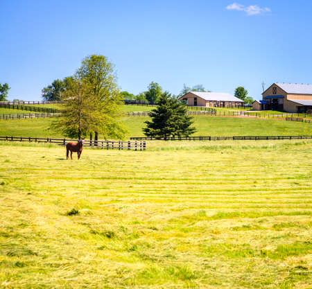 bluegrass: Horse farm