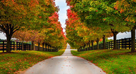 bluegrass: Road between horse farms in rural Kentucky Stock Photo