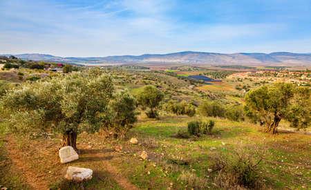 Huerto de olivos en el valle de Beit Netofa en Galilea central en Israel Foto de archivo - 30007332