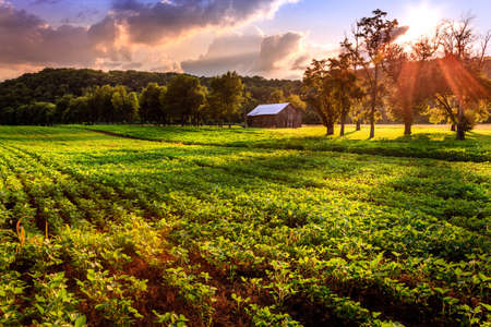 Evening scene on a farm Stock Photo