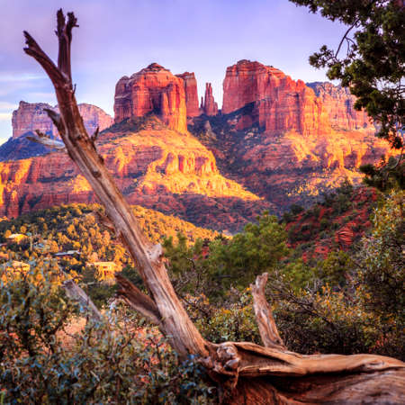 Cathedral Rock in Sedona, Arizona in the evening light with an old tree in the foreground Stockfoto