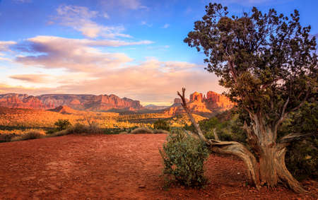 Scenic image of Cathedral Rock in Sedona, Arizona in the evening light with an old tree in the foreground Imagens