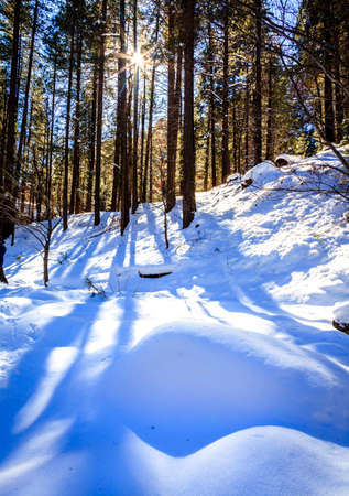 coconino national forest: West Fork Trail in Oak Creek Canyon near Sedona, Arizona after snow storm