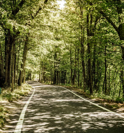 ハーバー スプリングス、ミシガン州近くの道路の木の横切り名勝