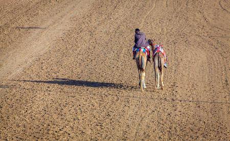 Dubai, United Arab Emirates - March 25, 2016: Camel handler  at Dubai Race Track, UAE