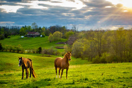 Beautiful chestnut horses on a farm in Central Kentucky at sunset 스톡 콘텐츠