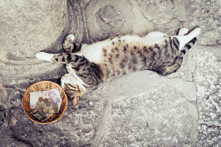 Cat is sleeping on the ground next to a bowl with cash Stock Photo