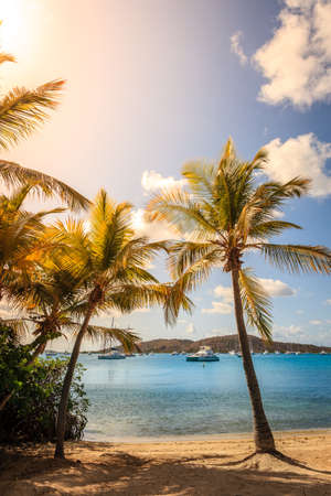 Beautiful beach with palm trees in British Virgin Islands
