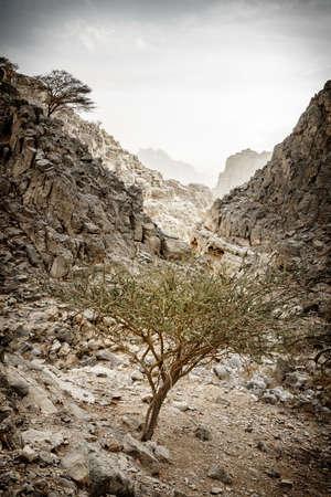 Small wadi in Hajar mountains in Ras Al Khaimah,UAE Imagens