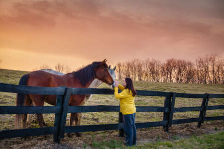Young woman is petting horses on a farm in Kentucky at sunset Foto de archivo