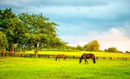 Two horses grazing on a farm in Central Kentucky Stok Fotoğraf