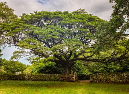 Beautiful old tree in Santa Rosa National Park in Costa Rica