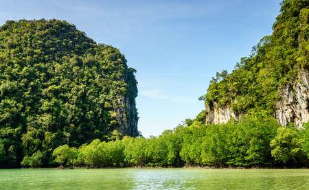 Mangroves in the hidden lagoon on Koh Hong island, Krabi, Thailand