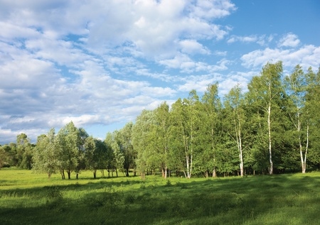 Beautiful summer birch grove edge in russian countryside