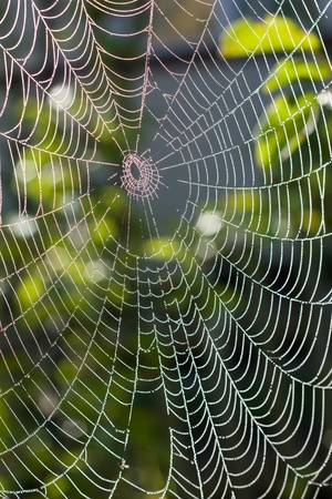 Spider web with water drops under sunlight