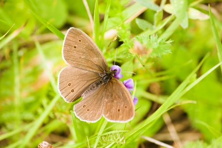 Brown butterfly is sitting on the flower on the green grass background photo