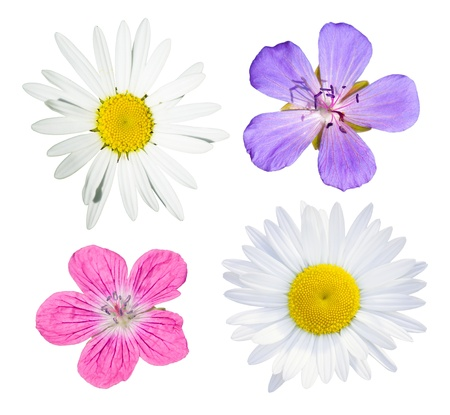 Wild flowers collection isolated on white background, meadow geranium and daisies Stock Photo