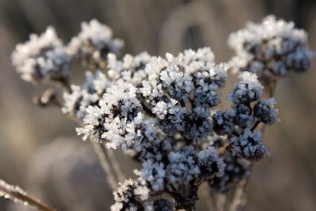 Frozen plant under sunlight closeup view