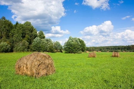 haymow: Field with haystacks and trees near the forest under blue sky with white clouds under sunlight Stock Photo
