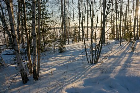 bright: Lakeside with trees and lake under snow under winter sunlight, winter landscape Stock Photo