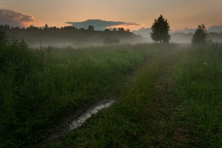 Sunset over the meadow with trees in fog