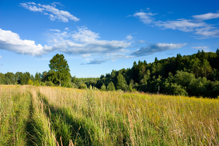 Meadow and forest under blue sky with white clouds under sunlight, rural landscape photo
