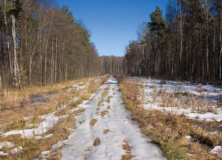 Spring country road covered with melting snow in forest under the spring sun under a clear blue sky photo