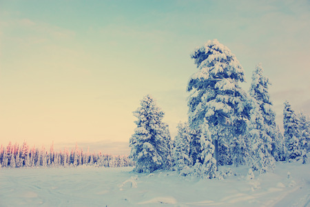 Snowy field and snow-covered pine trees and forest in the distance under clear blue sky at sunset, winter landscape. Toning effect done with a vintage retro Instagram style filter photo