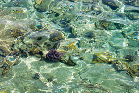 Sea shallow with some corals below water surface with waves under sunlight in Egypt Stock Photo