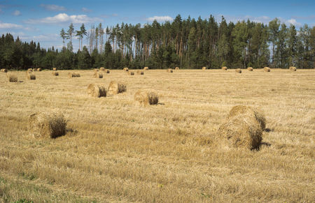 haymow: Field with haystacks and green trees near the forest under blue sky with white clouds under sunlight