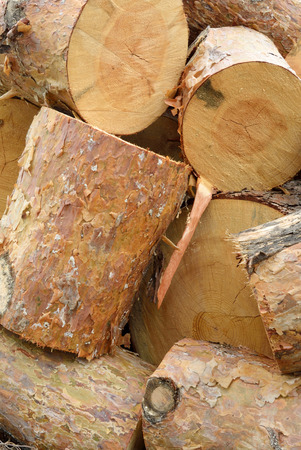 logging industry: Timber industry and wood logging creative concept: heap of sawn pine wood logs with rough pine bark closeup industrial background