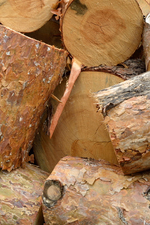 logging industry: Timber industry and wood logging creative concept: heap of sawn pine wood logs with rough pine bark close-up view, industrial background