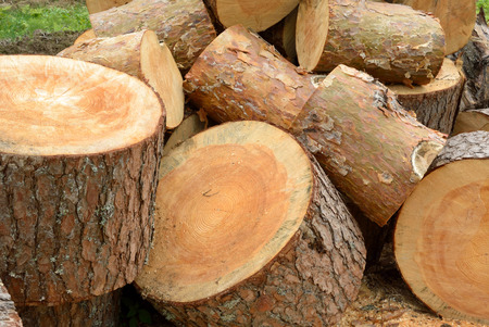 logging industry: Timber industry and wood logging creative concept: heap of sawn pine wood logs with rough pine bark closeup view Stock Photo