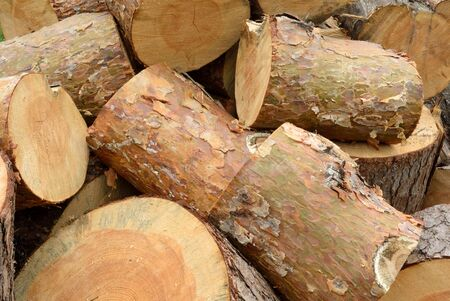 logging industry: Timber industry and wood logging creative concept: heap of sawn pine wood logs with rough pine bark close-up view industrial background