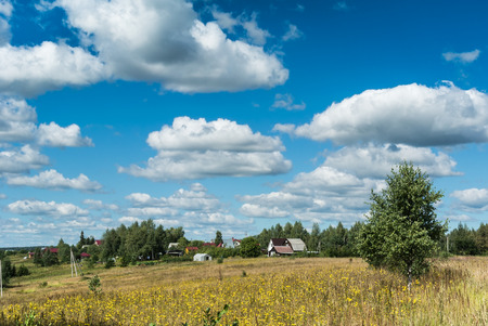 yellow wildflowers: Summer natural agricultural field landscape: beautiful meadow with yellow wildflowers under summer blue sky with white clouds under bright summer sunlight near the village landscape