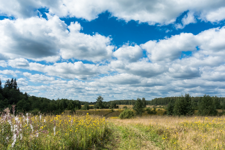 yellow wildflowers: Summer natural agricultural field landscape: beautiful meadow with yellow wildflowers and country road under summer blue sky with white clouds under bright summer sunlight landscape Stock Photo