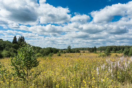 yellow wildflowers: Summer natural agricultural field landscape: beautiful meadow with yellow wildflowers under summer blue sky with white clouds under bright summer sunlight landscape Stock Photo