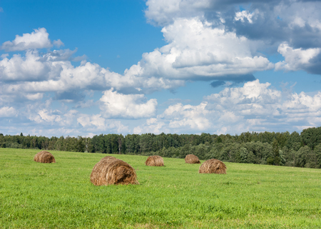 haymow: Field with haystacks and trees near forest under blue sky with white clouds under sunlight.