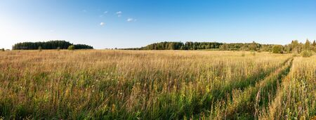 Summer natural agricultural field landscape - beautiful meadow with grass and wildflowers and country road under clear summer blue sky under bright summer sunlight panoramic landscape