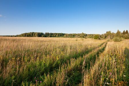 Summer natural agricultural field landscape - meadow with grass and wildflowers and country road under clear summer blue sky under bright summer sunlight